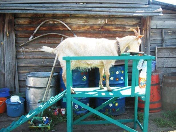 Станок для козы