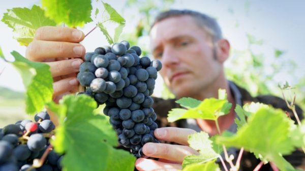Плодоовощеводство и виноградарство