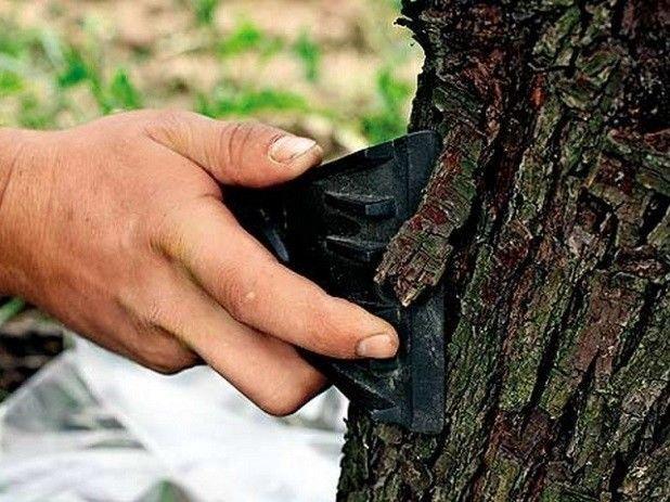 Подготовка дерева к побелке