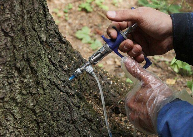 Инъекции деревьям