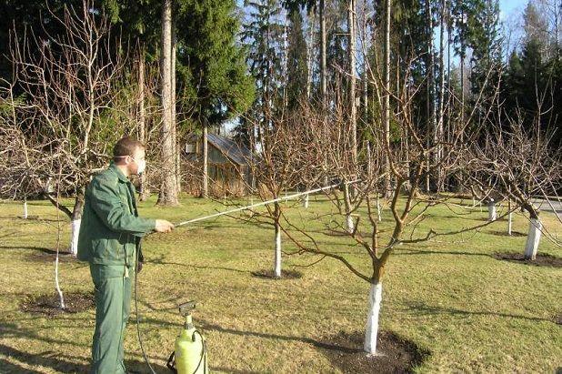 Весенняя обработка яблонь