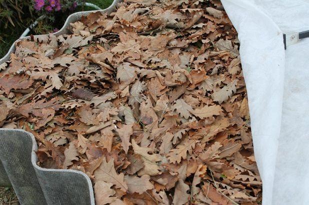 Перегной из листьев
