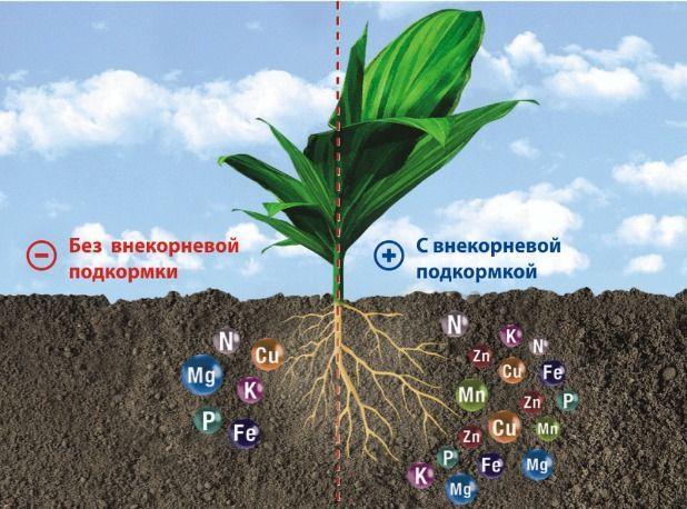 состав удобрений
