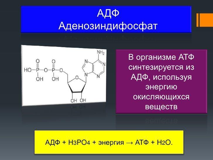 Аденозинфосфаты