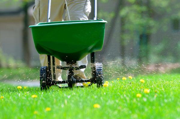 Удобрение для газона
