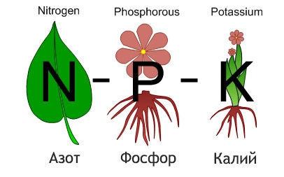 Удобрения на основе фосфора, азота, калия