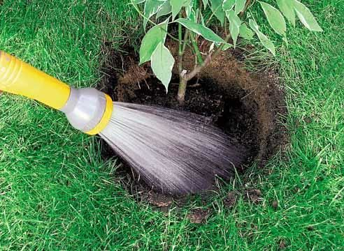 полив растений под корень