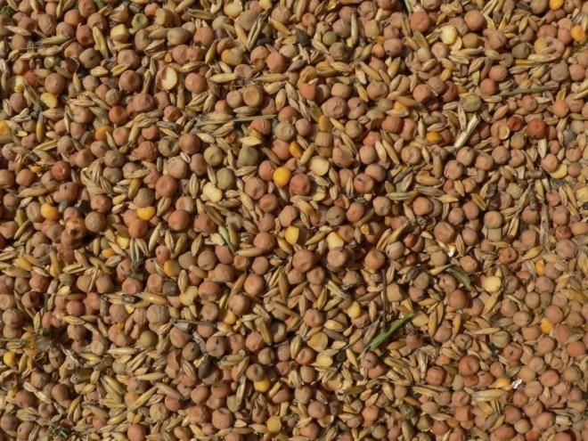 зерна бобовых