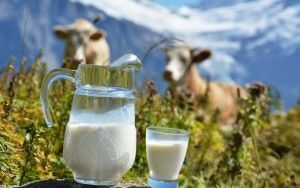 Прирост молока