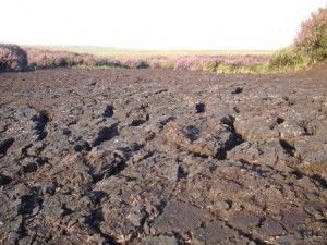 Осушение больших болотистых площадей