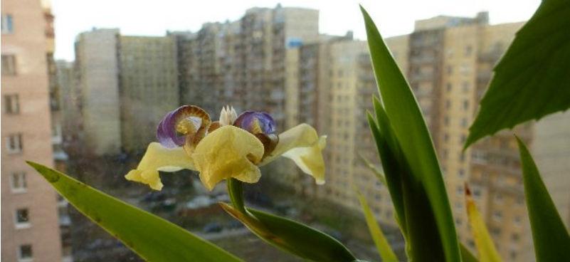 Цветку требуется естественное освещение