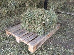 Корма для ондатры сено, сухая трава