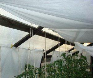 Притенение растений с помощью агроволокна