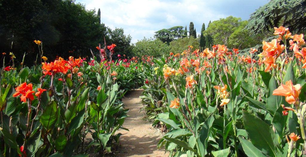 Существует более 50-ти видов Канны которые можно выращивать в саду
