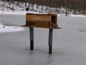 Гнездо для диких уток из деревянного ящика
