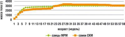 Изменение массы тела самцов и самок пекинской утки