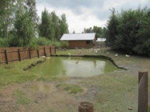 Небольшой пруд для уток возле дома