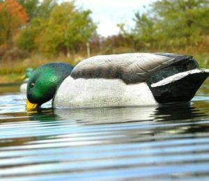 Реалистичная модель Mallard Back Water