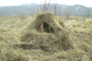 Шалаш замаскированный травой