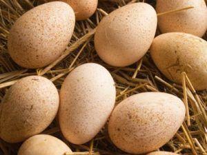 Яйцо муларда инкубационное