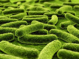 Пробиотики для индюшат