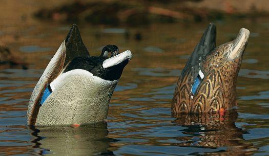 Чучела ныряющей утки