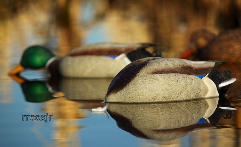 Имитация кормящейся утки от  Greenhead Gear