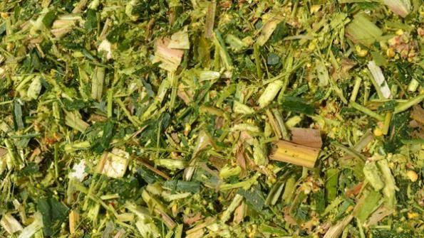 Измельченная зелень для добавления в корм