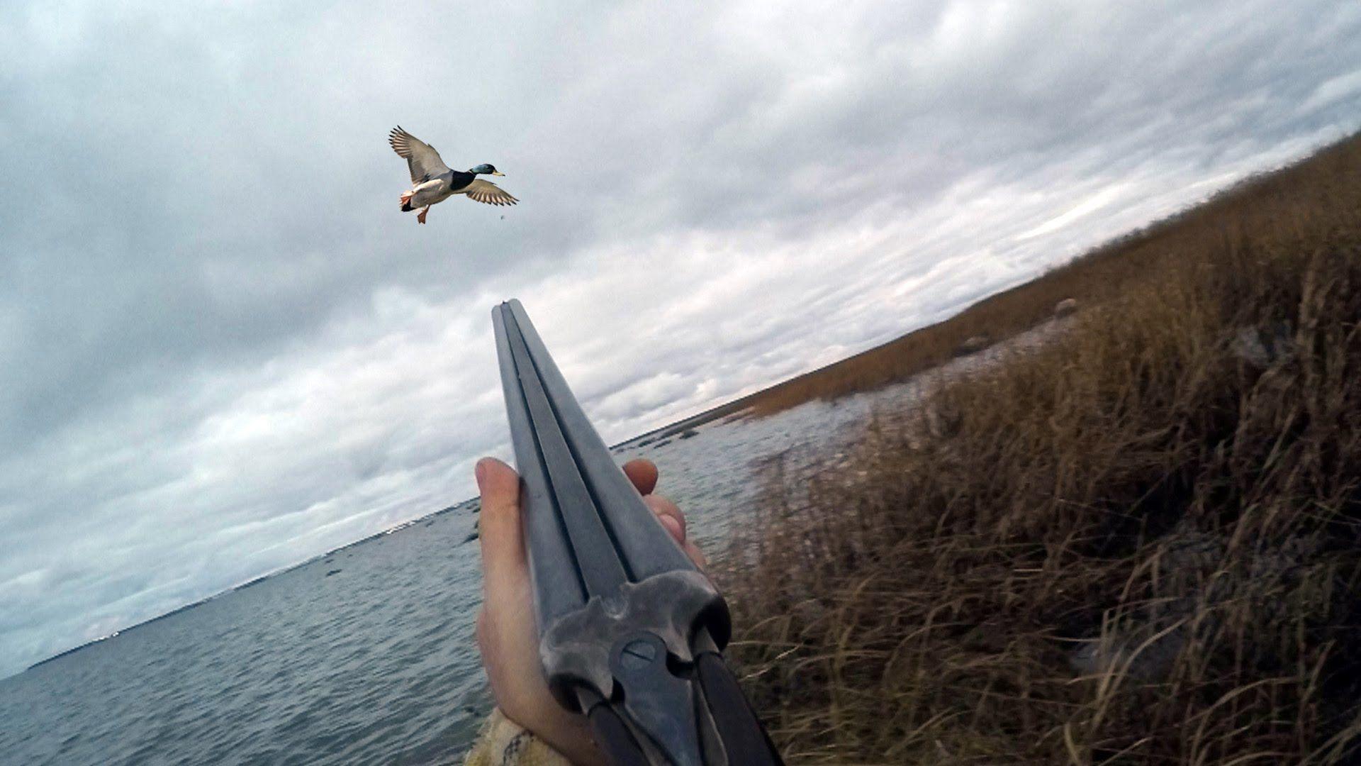 Охота на утку с подхода