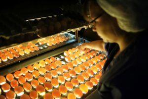 Овоскопирование индюшиных яиц