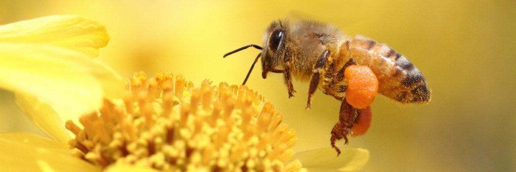 Пчеловодство в России развито очень хорошо
