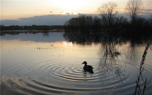 Подсадная утка (охота на закате)