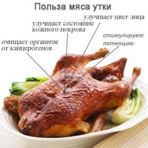 Польза утиного мяса