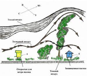 Схема правильного размещения ульев пасеки