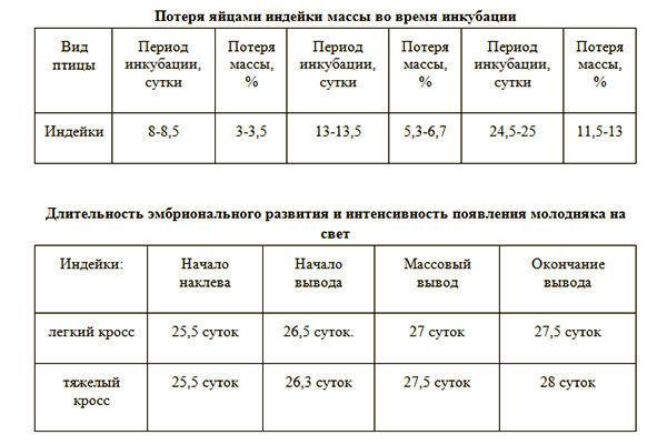 Таблица начала и конца вывода индюшек