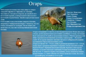 Дополнительная информация про утку Огарь