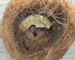 Искуственное гнездо утки