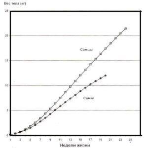 Продуктивность белых широкогрудых индеек