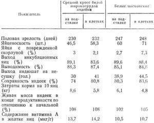 Продуктивность индеек напольного и клеточного содержания