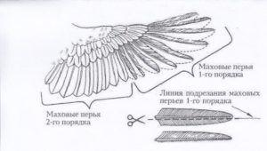 Схема подрезки пера