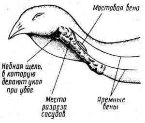 Схема расположения сосудов, для внешнего забоя