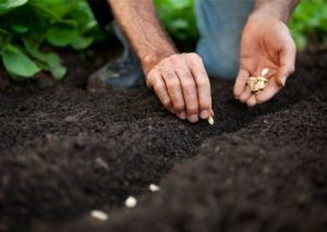 Высадка цветочных культур