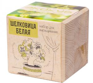 Набор для выращивания белой шелковицы