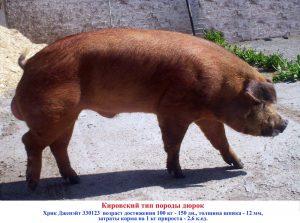 Кировский тип породы Дюрок - затраты корма